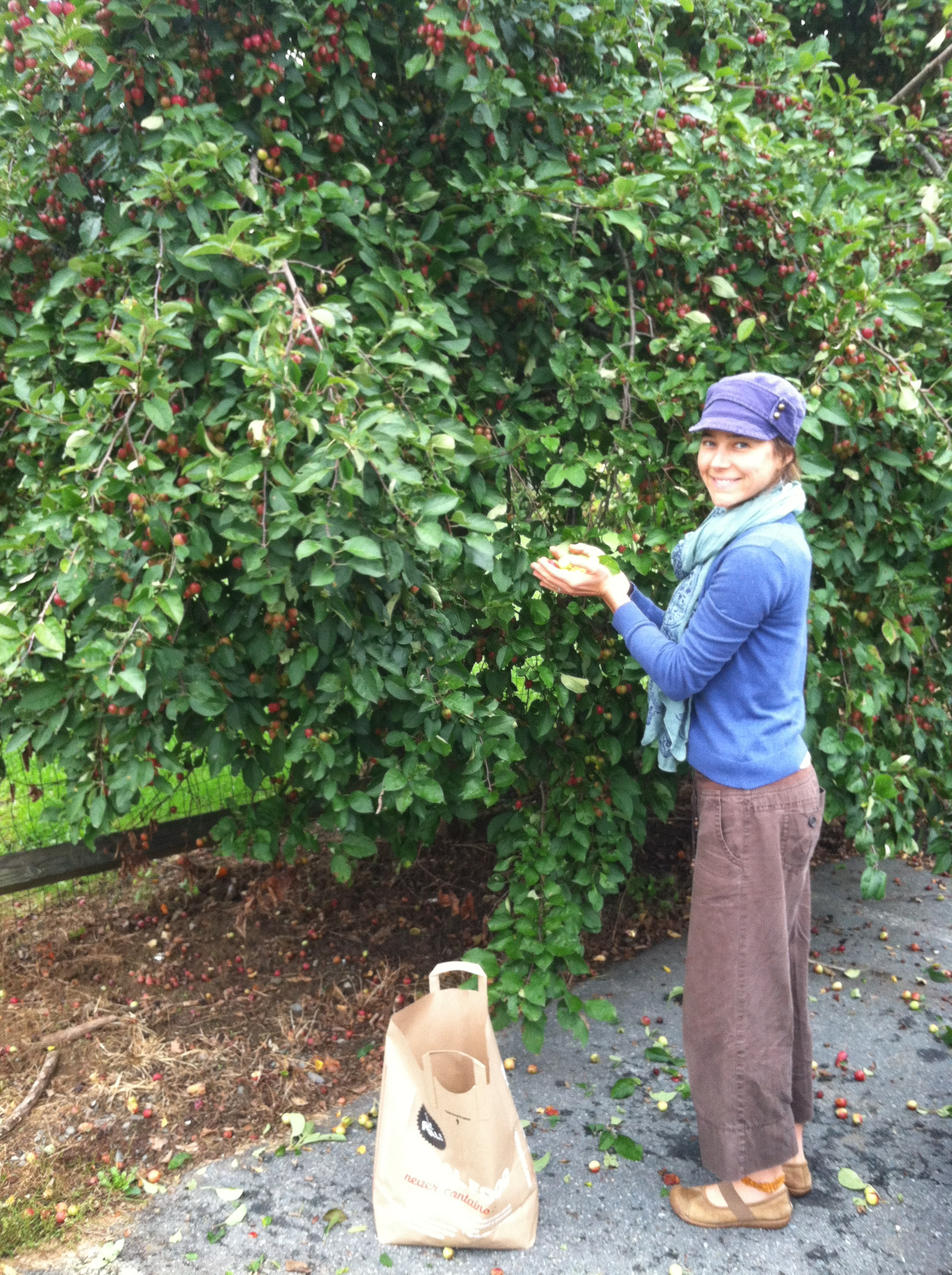 harvesting-crabapples